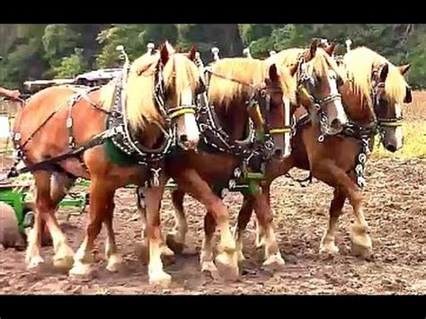 amish plowing with a seven hitch mules sowing oats in tennessee doovi
