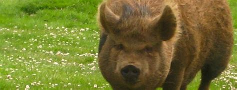 how to your to hunt hogs hog slaying how to cut your home electricity use union of