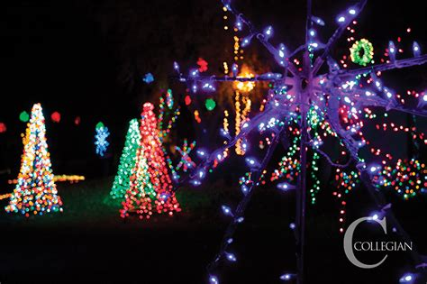 students light up christmas tree lane the collegian