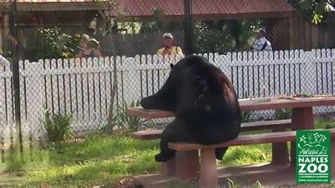 Bear At Picnic Table Meme - black bears at picnic table youtube