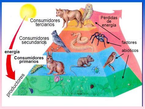cadenas y tramas alimenticias y niveles troficos cadena alimentaria o trofica