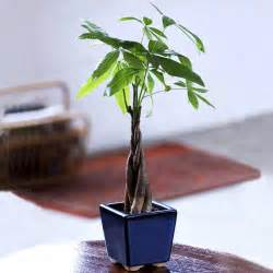 small plants for office desk indoor office plants for office environment office