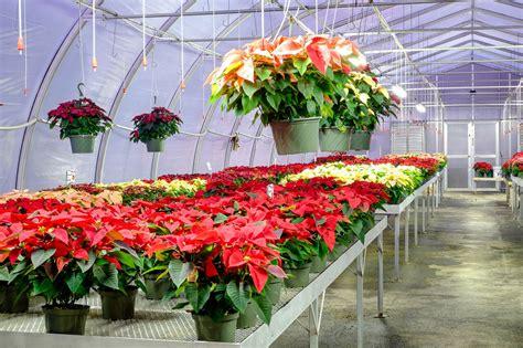 28 best christmas tree farms in lancaster pa frysville