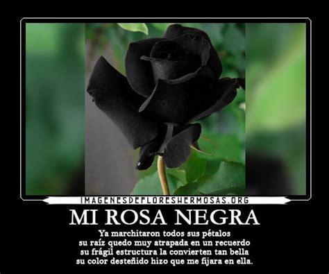 imagenes de rosas negras con frases de amor preciosas im 225 genes de rosas negras con frases de amor