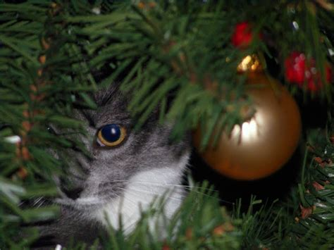 funny wayscto keep cats off christmas tree 10 safety tips for your pets madmikesamerica