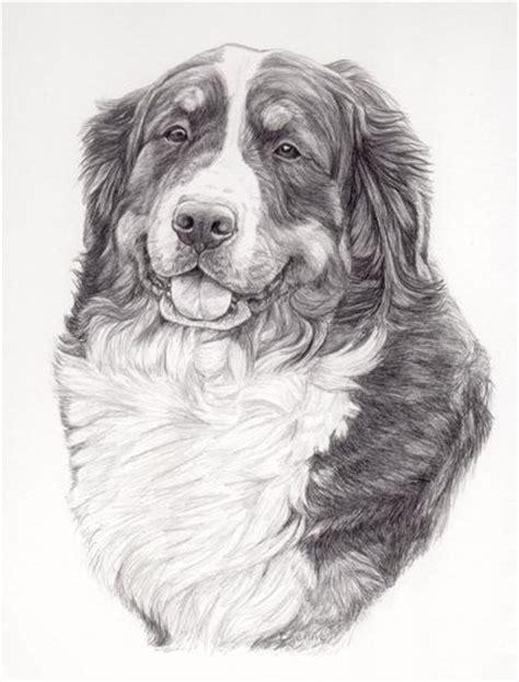 Door For Dog Potloodtekening Berner Sennen Hond Lissy Hondenportret In