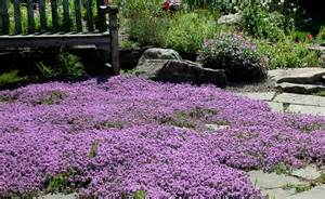 Shady Backyard Ideas 7 Varieties Of Easy Ground Covers To Enhance Any Landscape