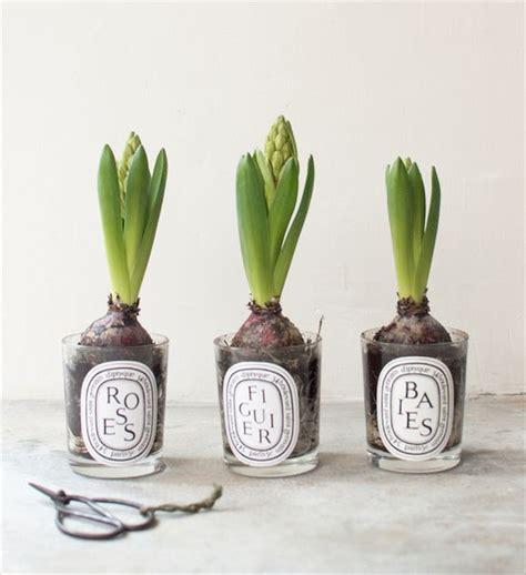 bulbi in vaso bulbi in vaso la primavera in casa charme and more