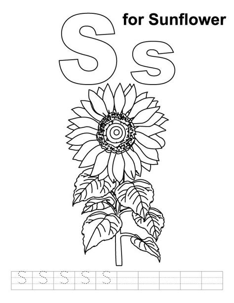 sunflower coloring pages preschool 17 best images about kansas day on pinterest coloring