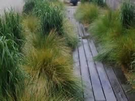 le jardin d herbes p 233 pini 232 re le jardin d herbes