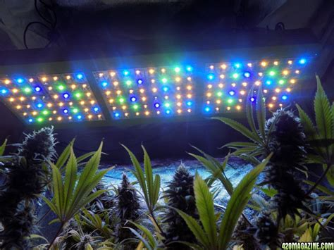 growing with led lights forum mars hydro led grow light discussion