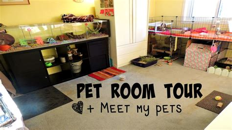 room pets pet room tour all of my pets 2015