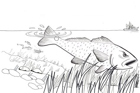 red fish coloring pages activities j steven spires