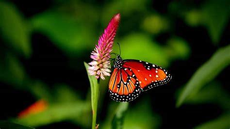 Cd Link Kupu Kupu gambar kupu kupu yang lucu pernik dunia
