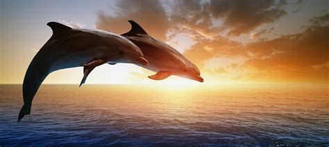 secrets the dolphin smile 25 amazing things dolphins do books top 10 deadliest insects in the world toplst