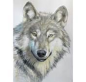 Online Art Class  How To Draw A Wolf Paint Basket TV