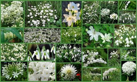 Would Love An All White Garden Other White Flowers White Flower Gardens