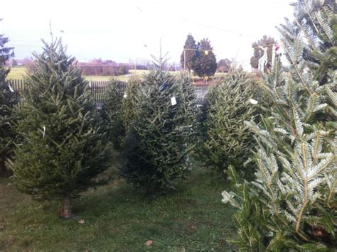 pricing guide local christmas tree lots edgewater md patch