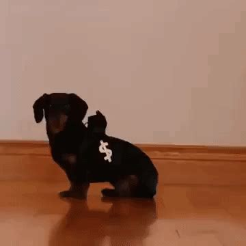 dogs robbing bank robbery gifs find on giphy
