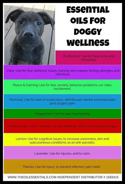 essential oils for dogs 54 best ideas about doterra for dogs on for dogs pets and doterra