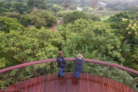 Garden Arch Cape Town In Images South Africa S Stunning Treetop Walkway Archdaily