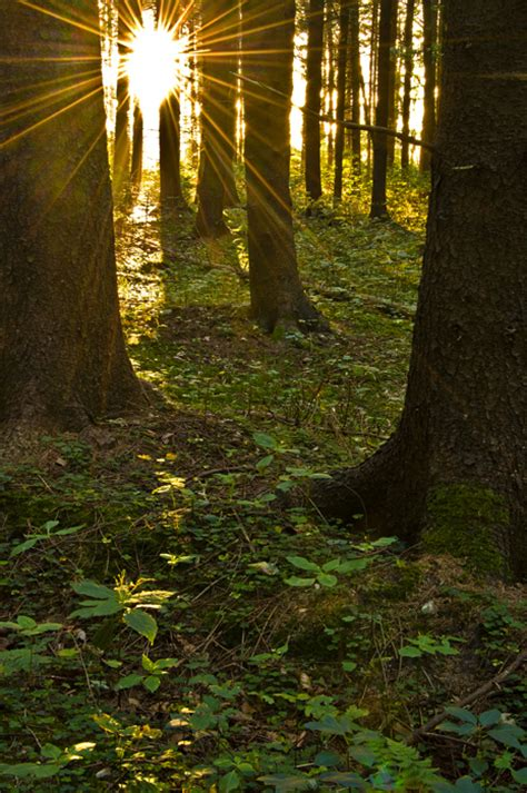 The Light In The Forest by The Light In The Forest By Bull04 On Deviantart