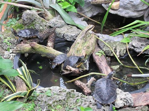 turtle ponds for backyard turtle pond garden outdoors pinterest turtle pond