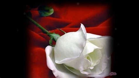 las mas hermosas fotos de rosas con poemas de amor las flores mas hermosas del mundo youtube