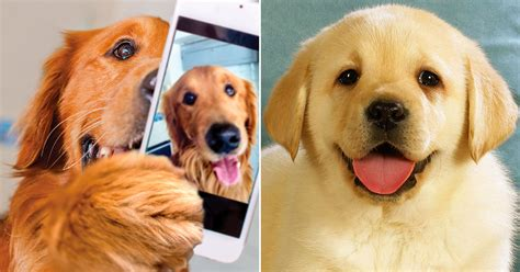 which breed are you your feelings toward these dogs will determine which breed is best for you quizly