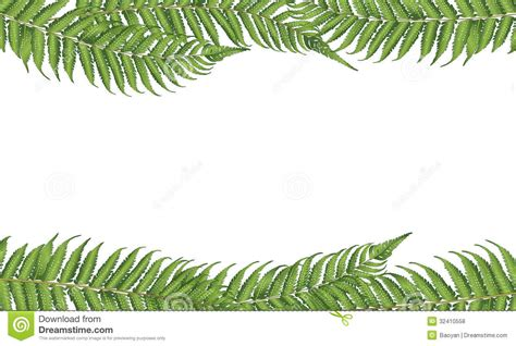 Christmas Tree Drawing by New Zealand Leaf Stock Photo Image Of Fern Exotic