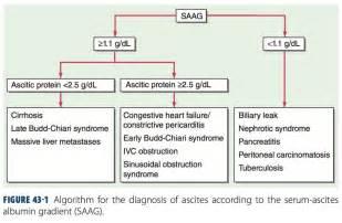 Secondary Amenorrhea Detox by Serum Ascites Albumin Gradient Saag Algorithm Imle