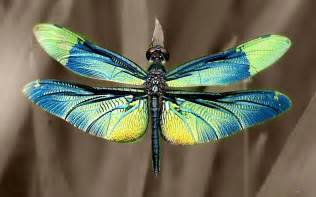 colorful dragonfly it s thursday and the dragonflies are flying smilingbagel