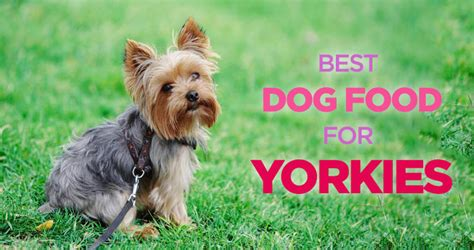 best yorkie food best food for yorkies small stomach picky appetite