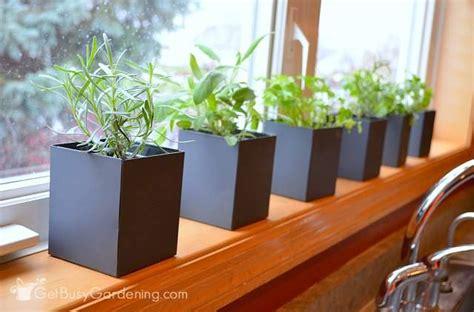indoor herb garden tips a guide to successful indoor herb