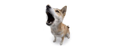 why do dogs bark at why do dogs bark at sciencepic