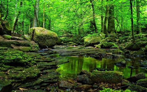 imagenes de bosques verdes rocas hierba verde bosque de agua fondos de pantalla