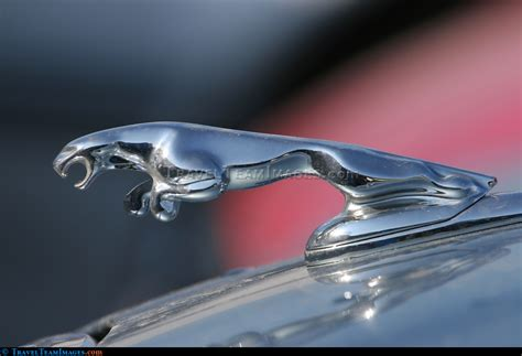 jaguar car icon jaguar car icon large picture from the travelteamimages