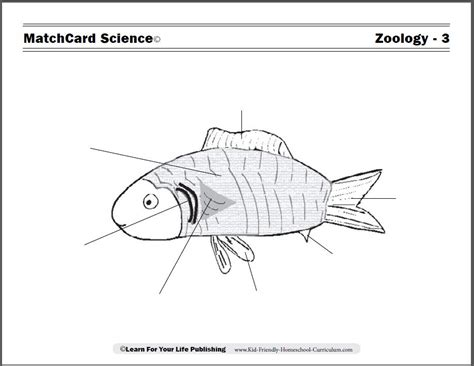 printable zoology worksheets zoology worksheets worksheets for all download and share