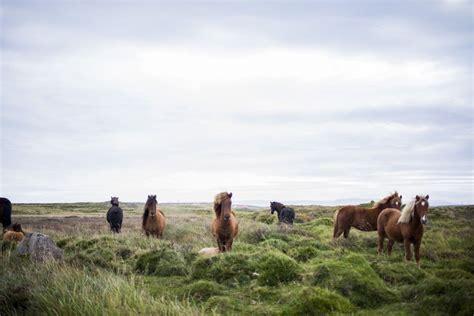 public domain images brown horses green field blue sky building  blog find  spirit