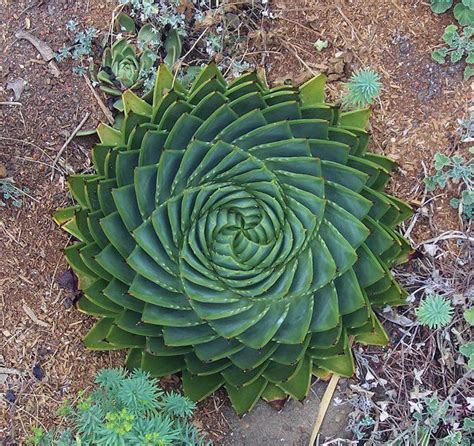 patterns in nature bored of studies 58 best spirale images on pinterest beautiful flowers
