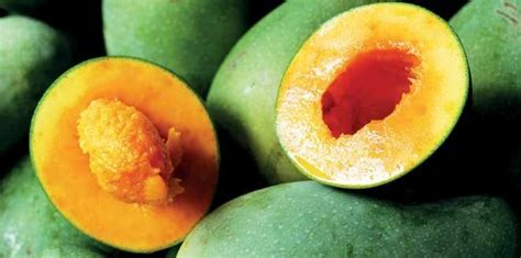 Berapa Harga Bibit Mangga Alpukat harga buah mangga alpukat dan jenis lainnya musim ini 2017