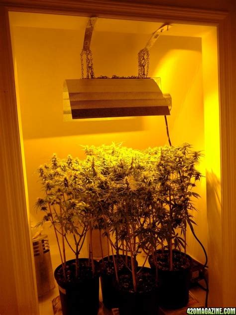 small grow room small grow room setup design ventilation fans ideas marijuana grow rooms for sale best indoor