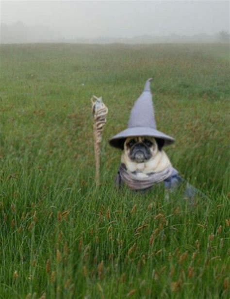 pug wizard 3887 best moon pie images on