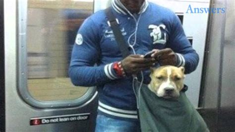 Dogs That Fit In Your Purse by This Subway Banned Dogs That Don T Fit In A Small Bag So