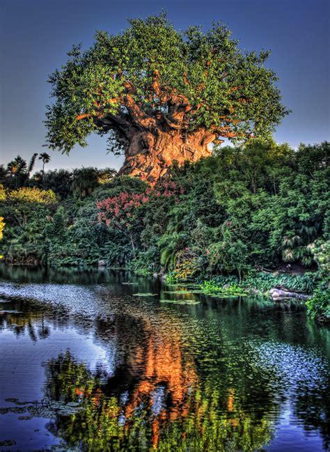 Tree Of Life by Tiggerific Tuesday Trivia The Tree Of Life Frontierland