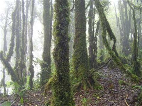 Lumut H kumpulan materi ilmu pelajaran ciri ciri bioma