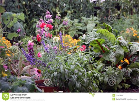 Flowers In Vegetable Garden Flowers And Vegetable Garden Bed Stock Photo Image 22543466