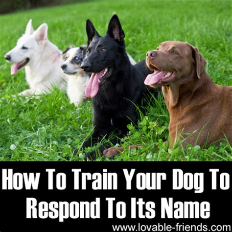 how to teach a puppy its name how to your to respond to its name lovable friends