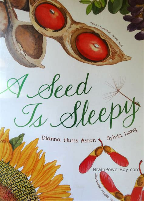 a seed is sleepy a rock is lively a book review brain power boy