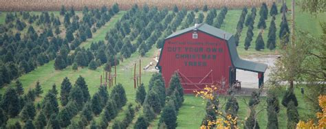 best christmas tree farm in nj tree farm near me trendy ideas trees near me u cut lights decoration 100 the